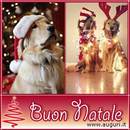 Immagini Natalizie Con Animali.Buon Natale A Quattro Zampe