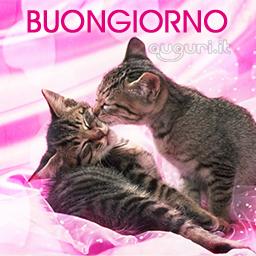 Un affettuoso buongiorno for Buongiorno con gattini
