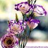 Questi fiori sono belli come te
